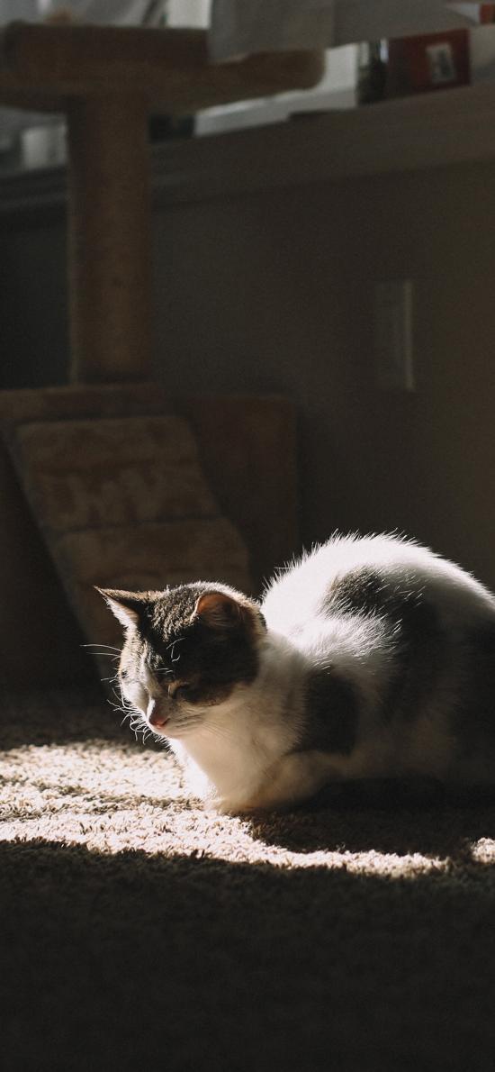 貓咪 寵物 地毯