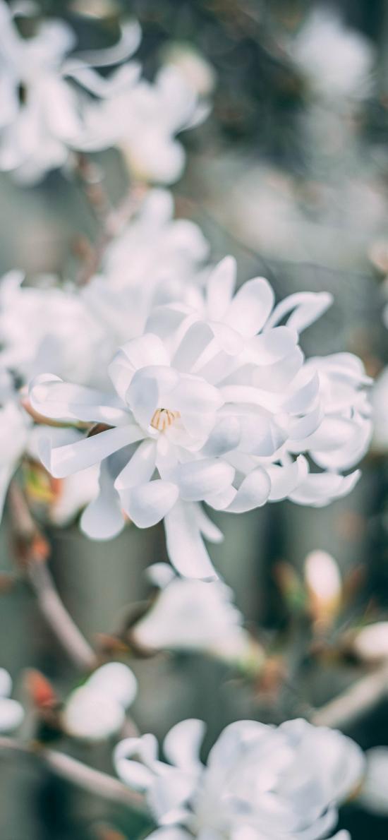 鮮花 白色 純潔 綻放