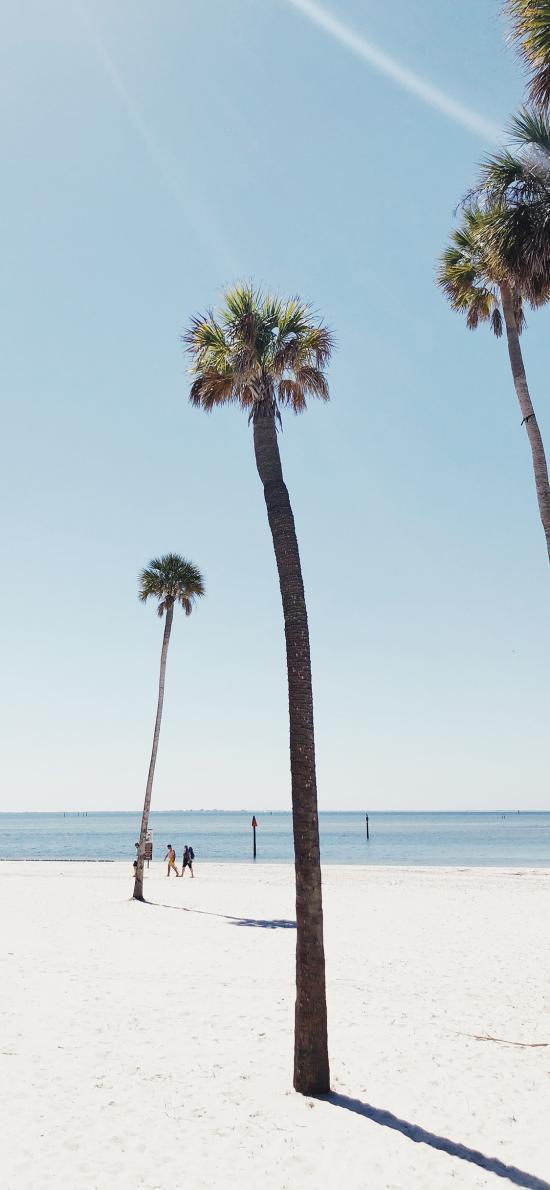 沙灘 椰樹 高大 陽光