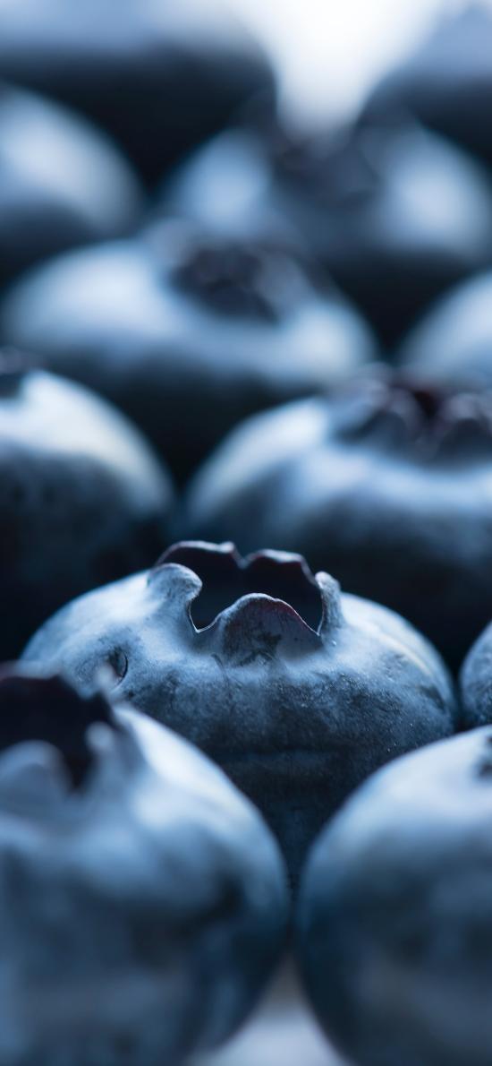 藍莓 水果 特寫 尾部 營養