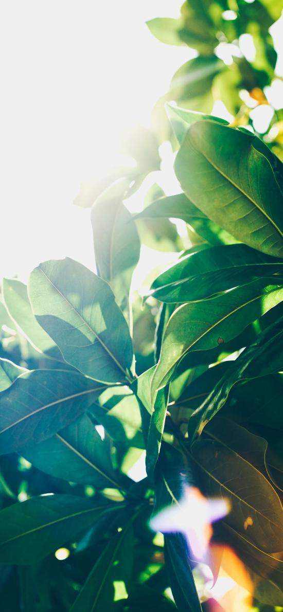 綠葉 枝葉 陽光 自然