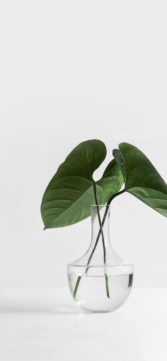 花瓶 綠植 枝葉 綠化
