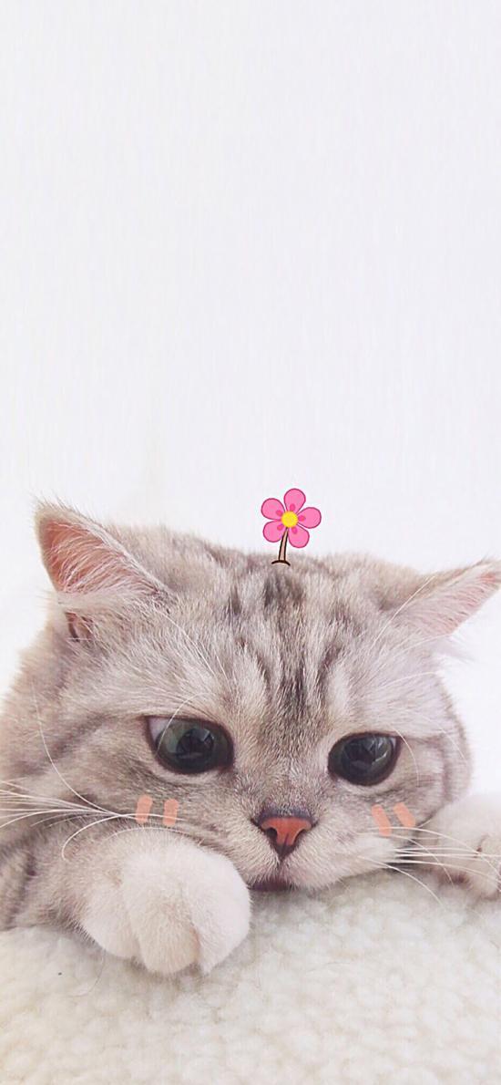 寵物貓 貓咪 可愛 小花花
