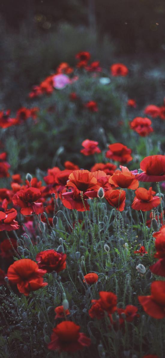 鮮花 花叢 植被 盛開
