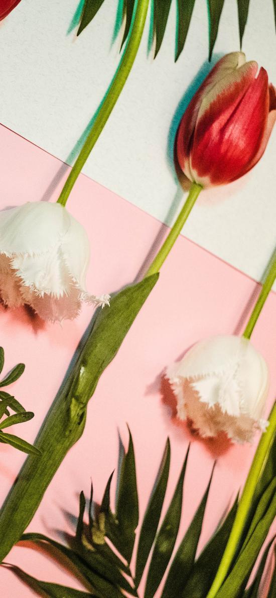 鮮花 郁金香 枝葉 花朵