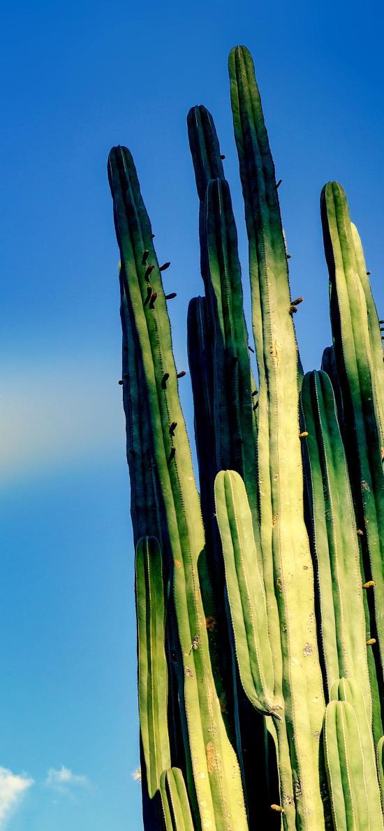 植株 仙人掌 沙漠之花 防輻射