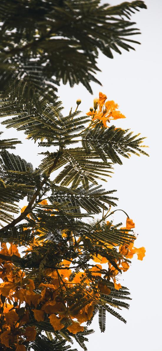 樹木 綠葉 鮮花 黃色