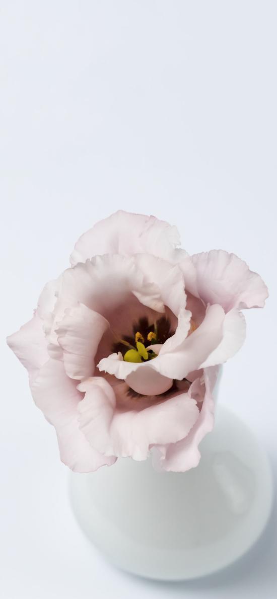 瓷瓶 插花 鮮花 粉色 綻放