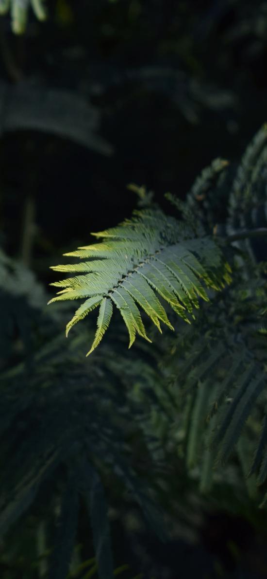 植株 蕨類植物 潮濕 綠化