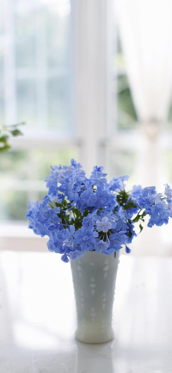 藍雪花 插花 鮮花 花瓶