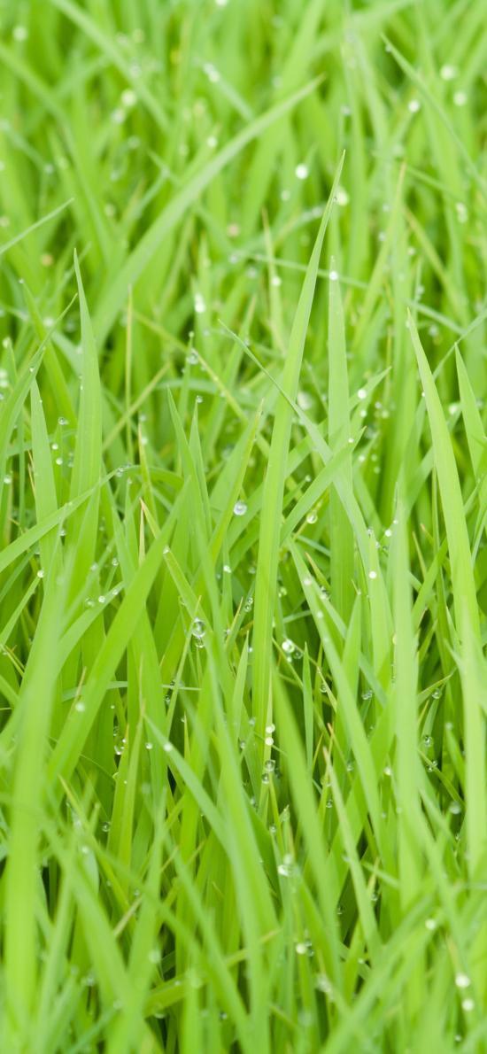 小草 草坪 綠色 春意 大自然