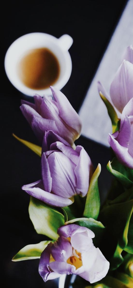 鮮花 郁金香 枝葉