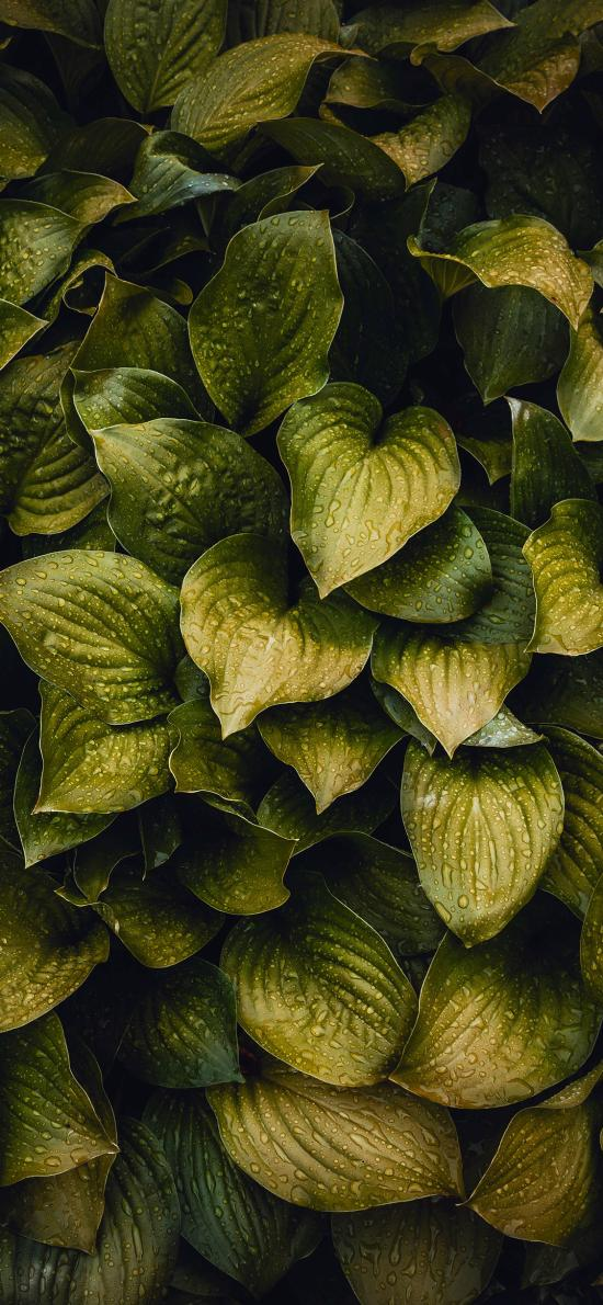 綠植 露珠 生長 濾鏡 枝葉
