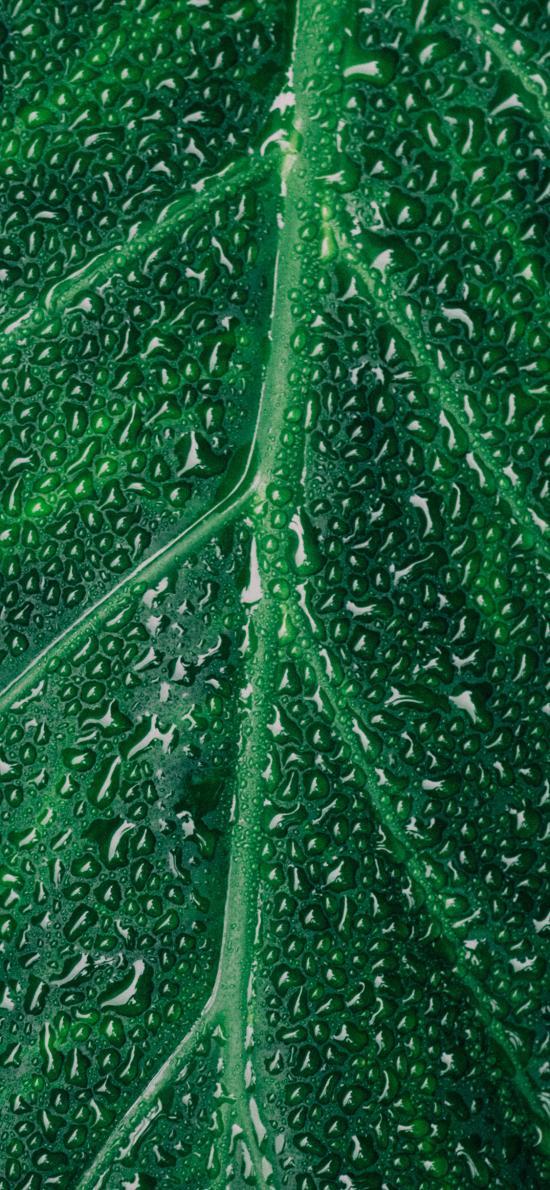 綠葉 水珠 露珠 紋路 綠植