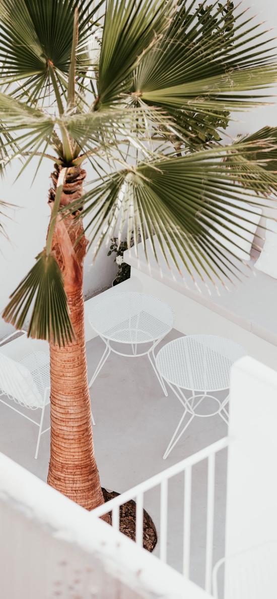 棕櫚 樹木 觀賞 綠化
