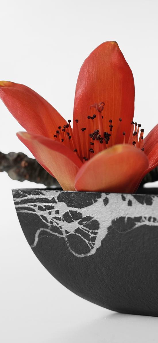 木棉花 鮮花  盛開 瓷器