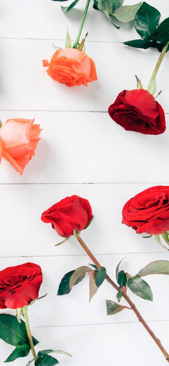 玫瑰 鮮花 花朵 花苞