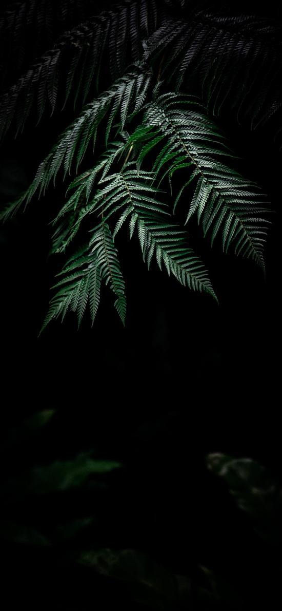 陰暗 樹葉 綠葉 綠化