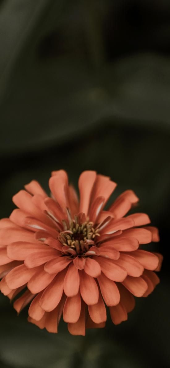 鮮花 盛開 花朵 花瓣