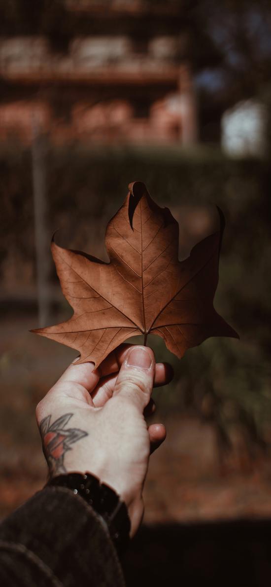 落葉 楓葉 枯葉 紋身