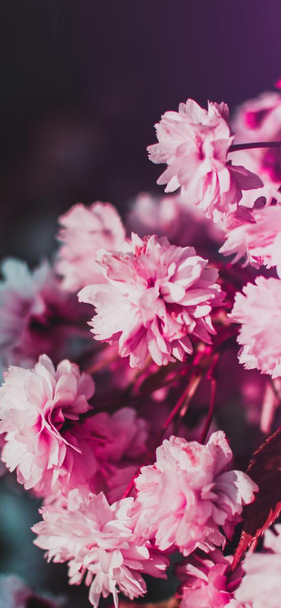 花季 鮮花 盛開 花簇