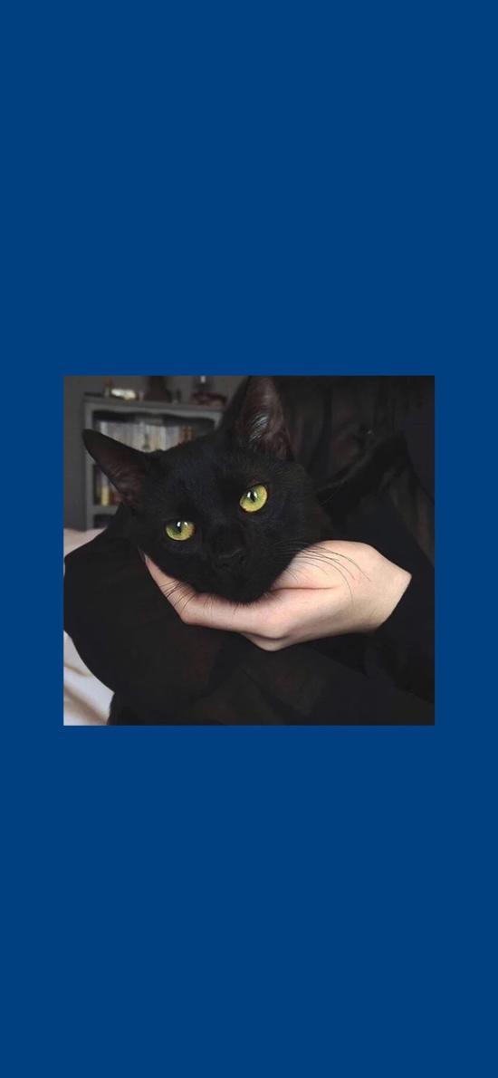 蓝色背景 猫咪 黑猫 喵星人
