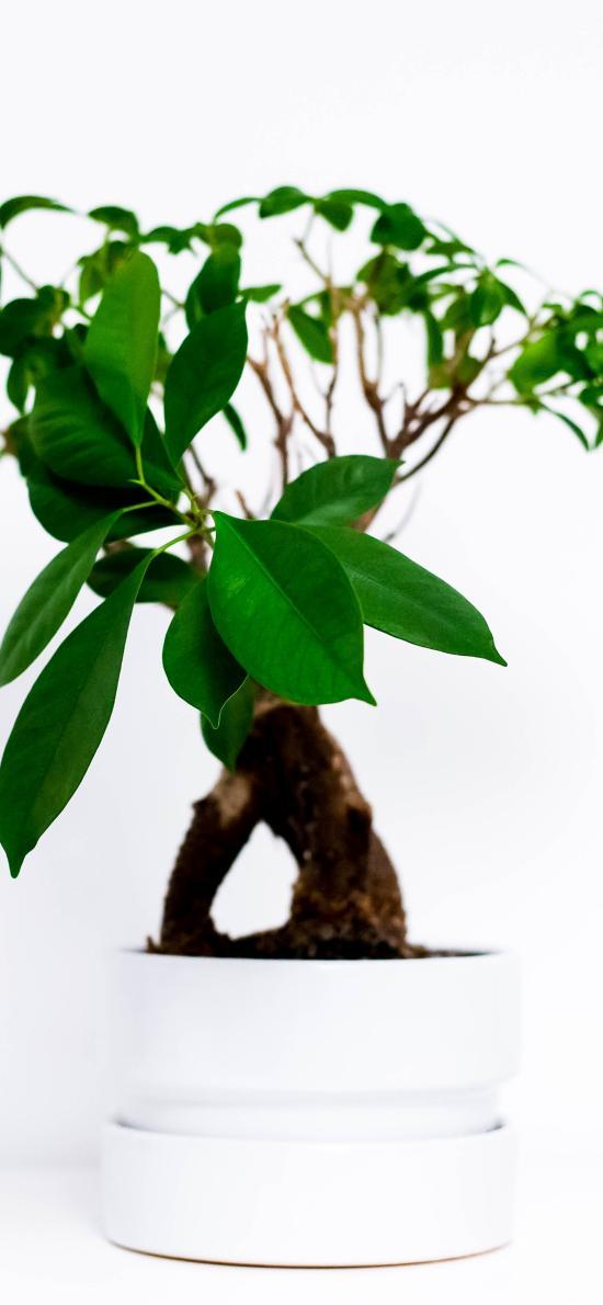 绿植 盆栽 绿化 枝叶