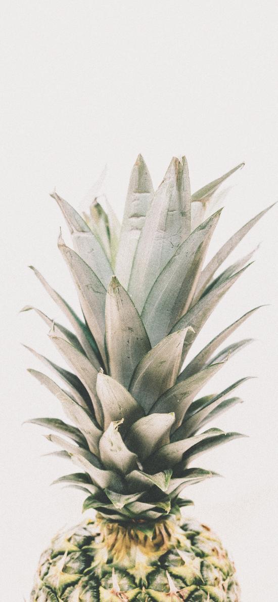 水果 菠萝 叶冠 叶瓣