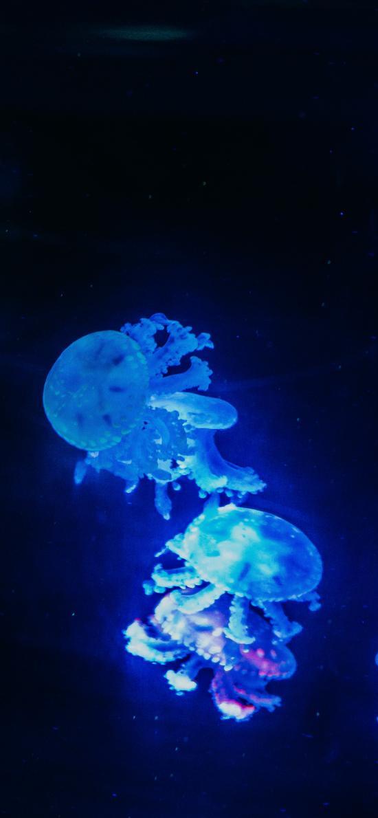水母 浮游 荧光 海洋生物