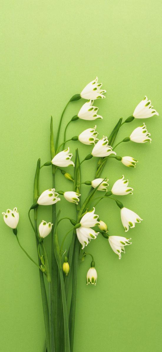 雪铃花 鲜花 绿色 枝干