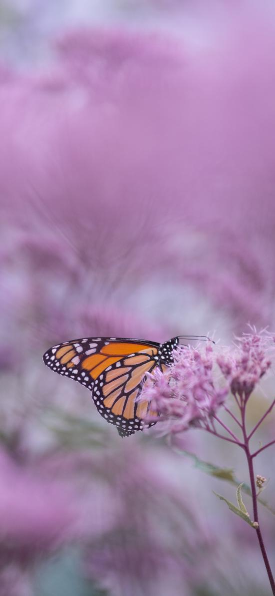 花丛 蝴蝶 昆虫 鲜花