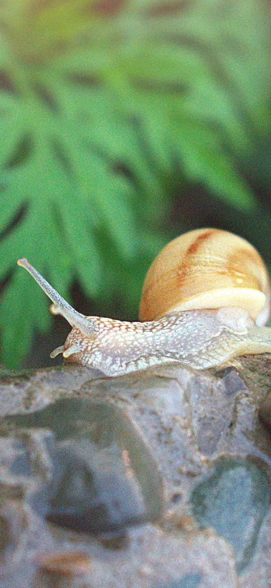 蜗牛 爬行 软体 药用