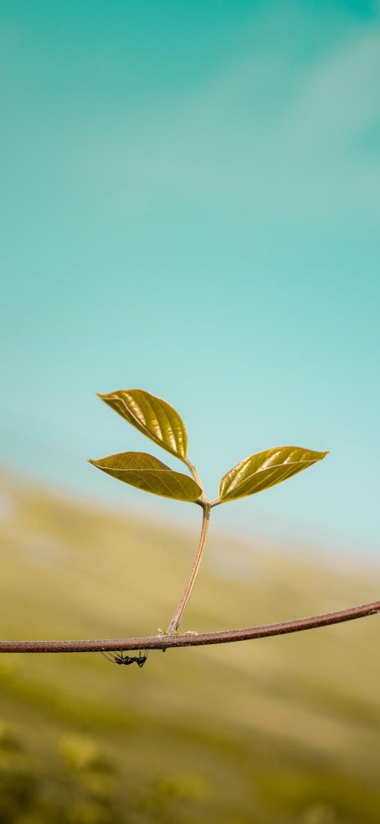 植物 绿芽 生命 蚂蚁