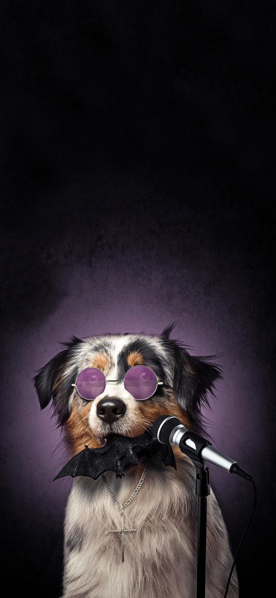 宠物狗 写真 墨镜 话筒 创意