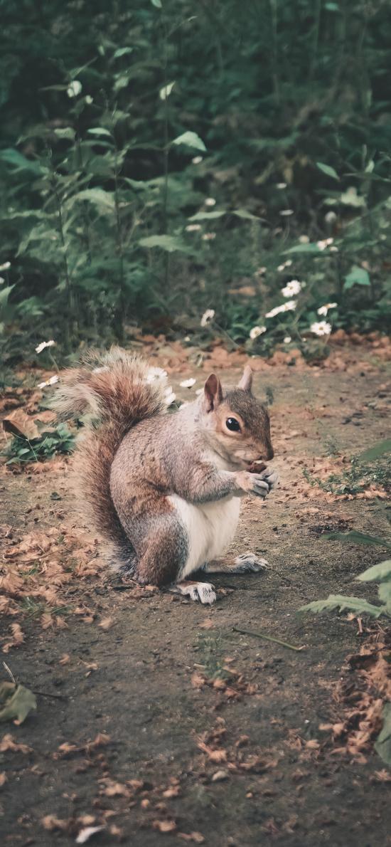 松鼠 戶外 覓食 尾巴