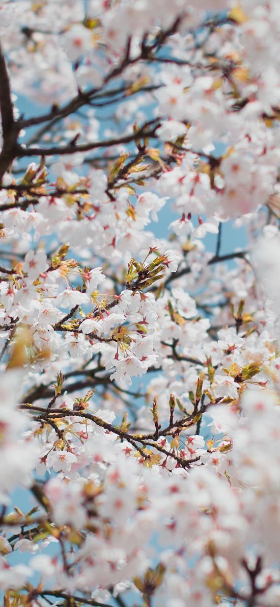 鮮花 盛開 浪漫 枝頭