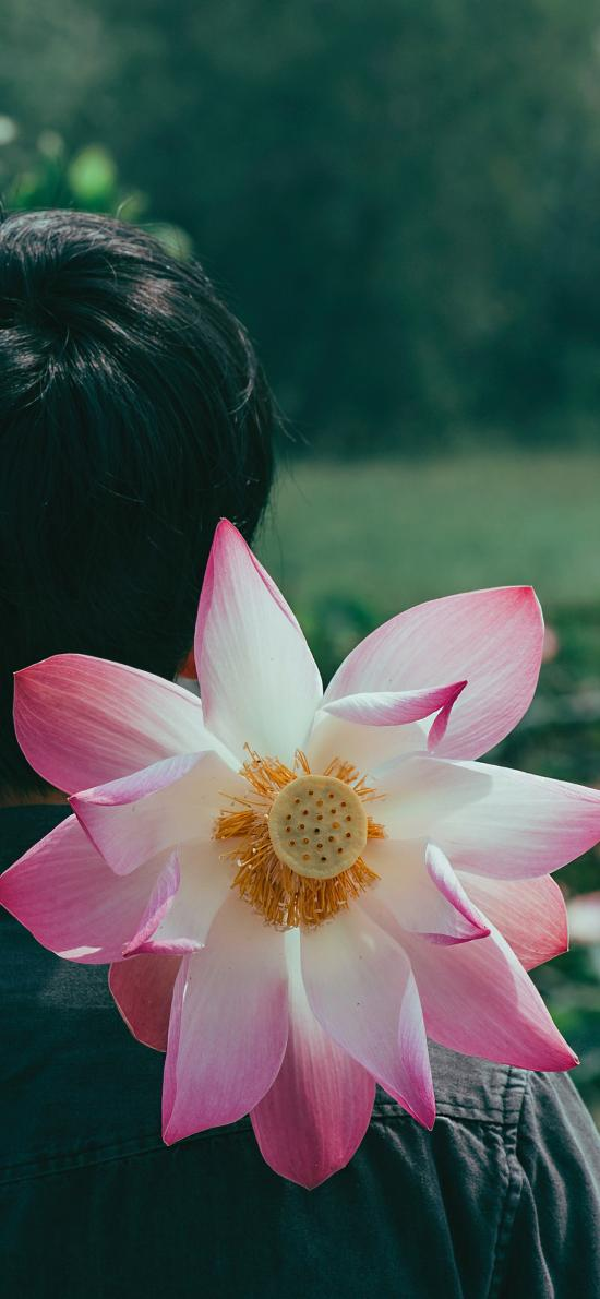 荷花 蓮 鮮花 盛開 背影