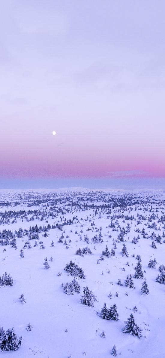 冬季 冬天 雪地 樹木