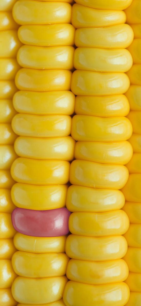 玉米 糧食 顆粒 黃色