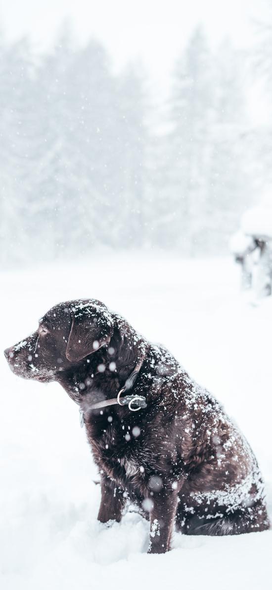雪地 白雪覆蓋 寵物狗 汪星人