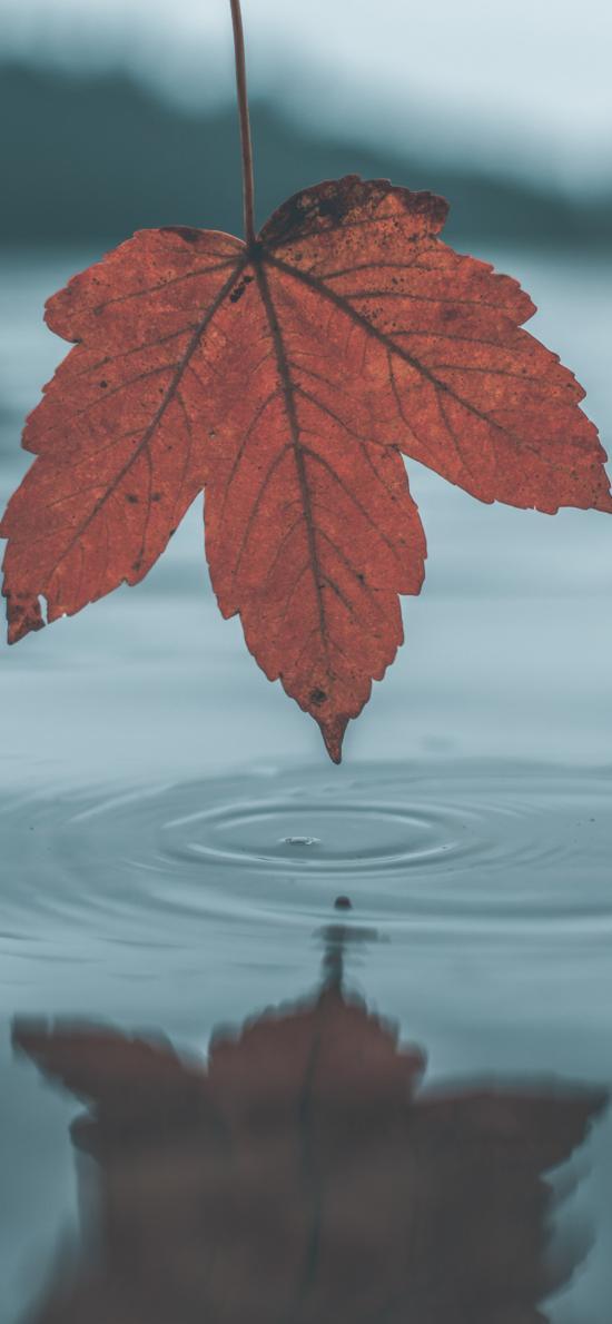 湖泊 楓葉 紅色 水波紋
