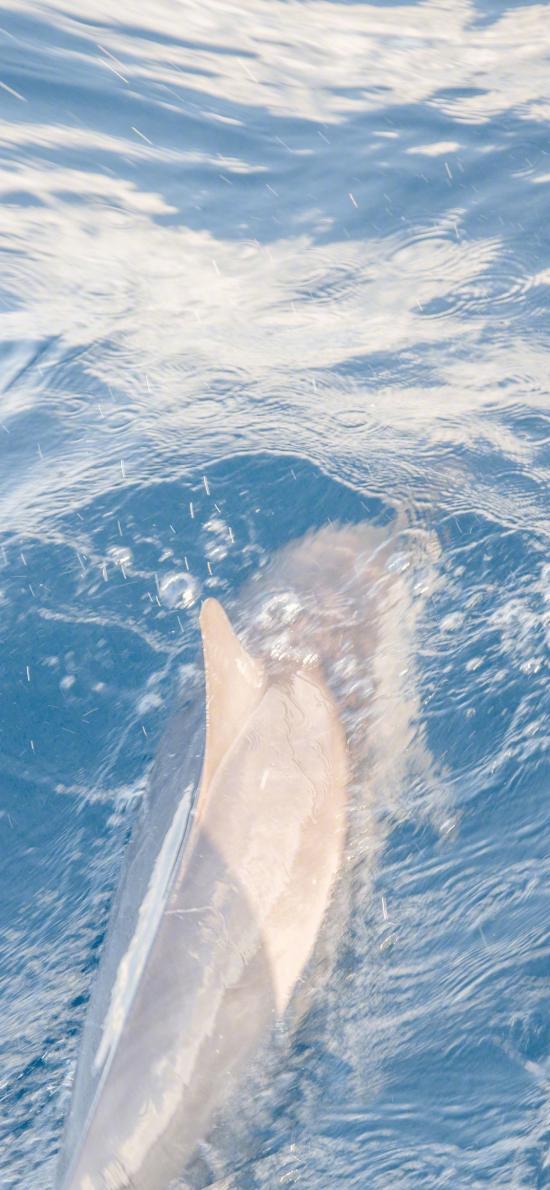 海豚 游泳 藍色 海洋生物 海水