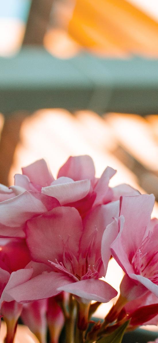鮮花 花束 盛開 花蕊