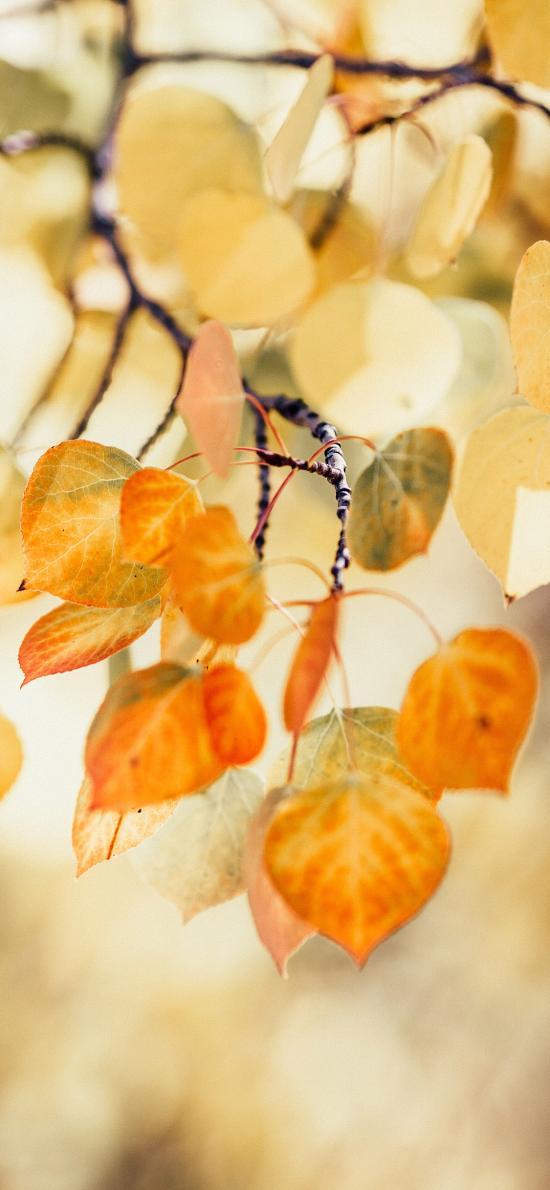 樹木 枝葉 枯黃 秋季