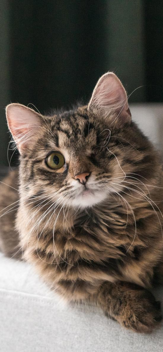 寵物貓 喵星人 花貓 獨眼