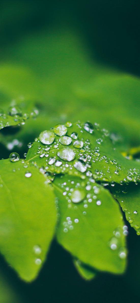 枝葉 綠葉 露珠 綠化