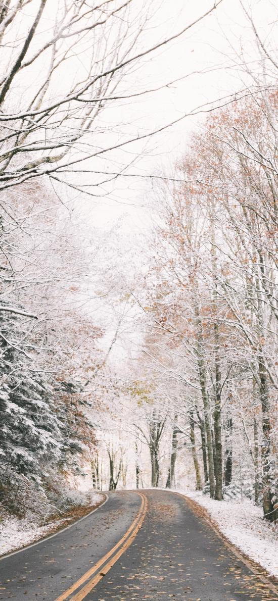 郊外 道路 林木 白雪覆蓋