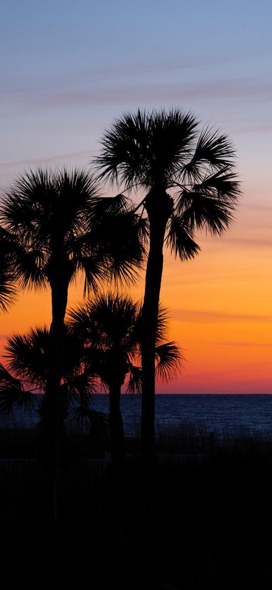 海景 夕陽 椰樹 唯美
