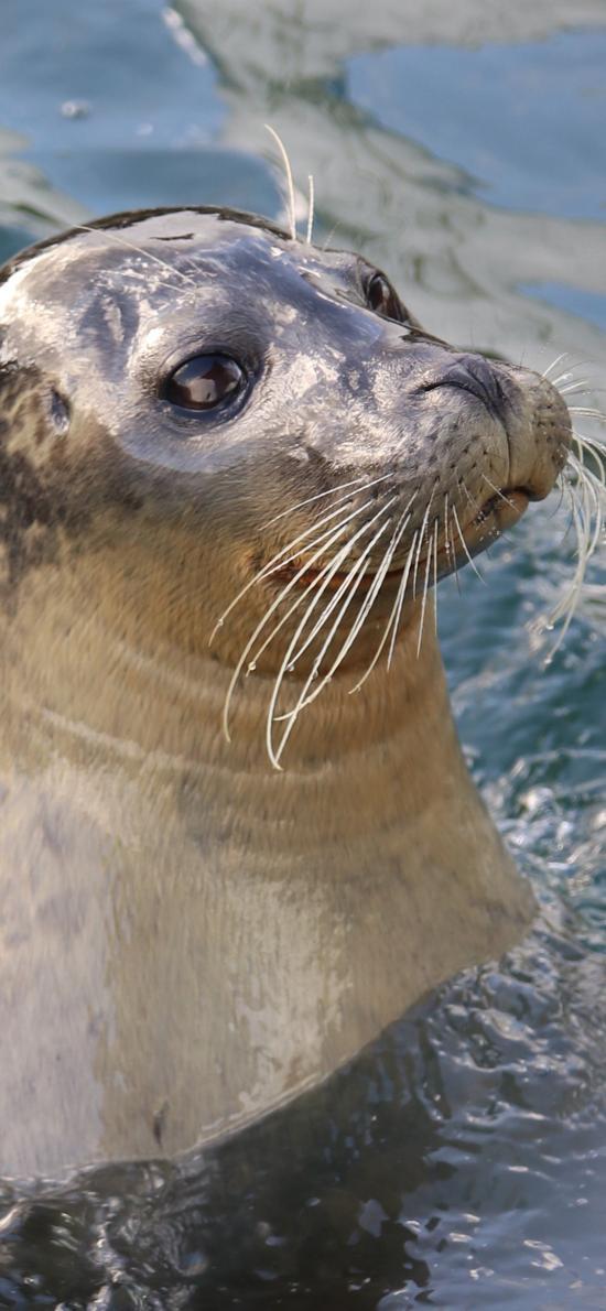 海獅 海洋生物 特寫 萌
