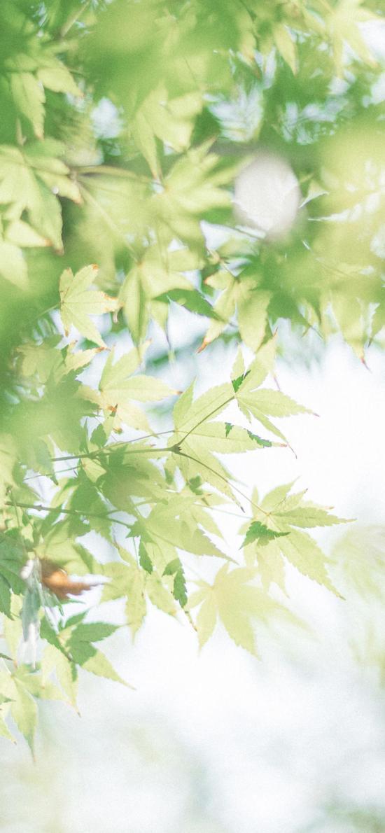 樹木 樹葉 清新 綠化